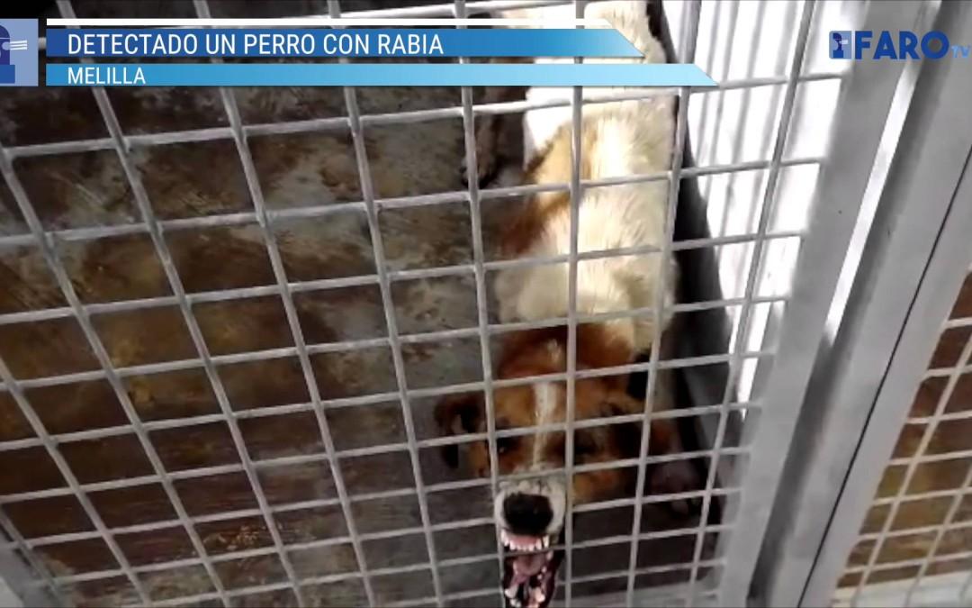 Un perro da positivo en rabia en Melilla
