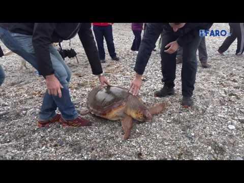 CECAM suelta una tortuga boba en Calamocarro