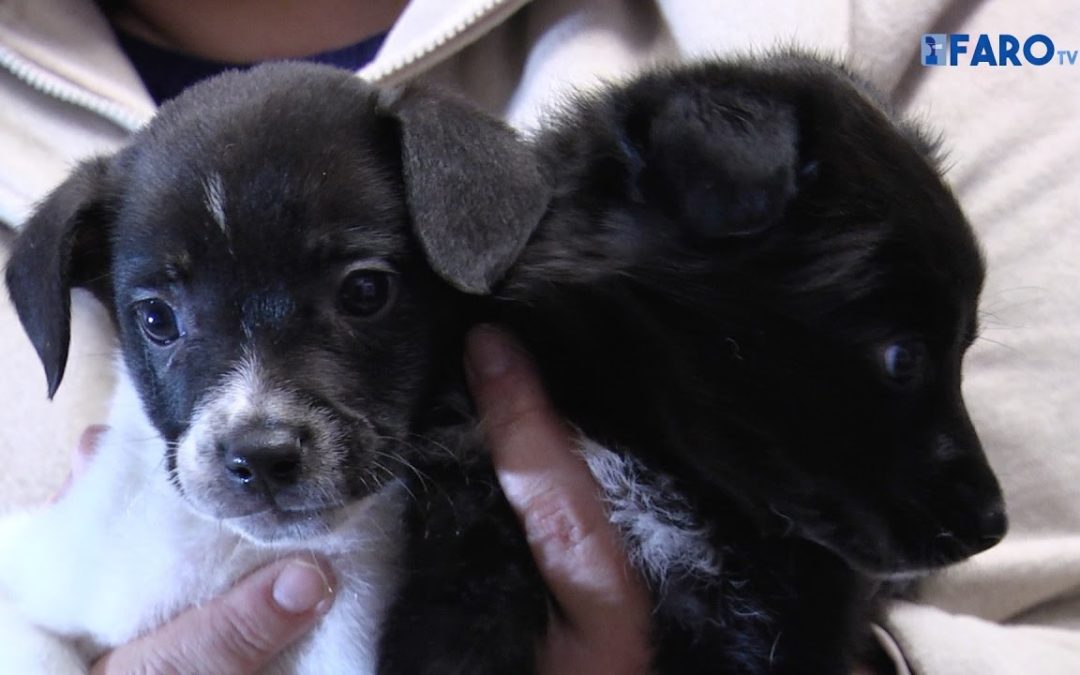 La Protectora hace un llamamiento a la adopción frente a la compra de animales