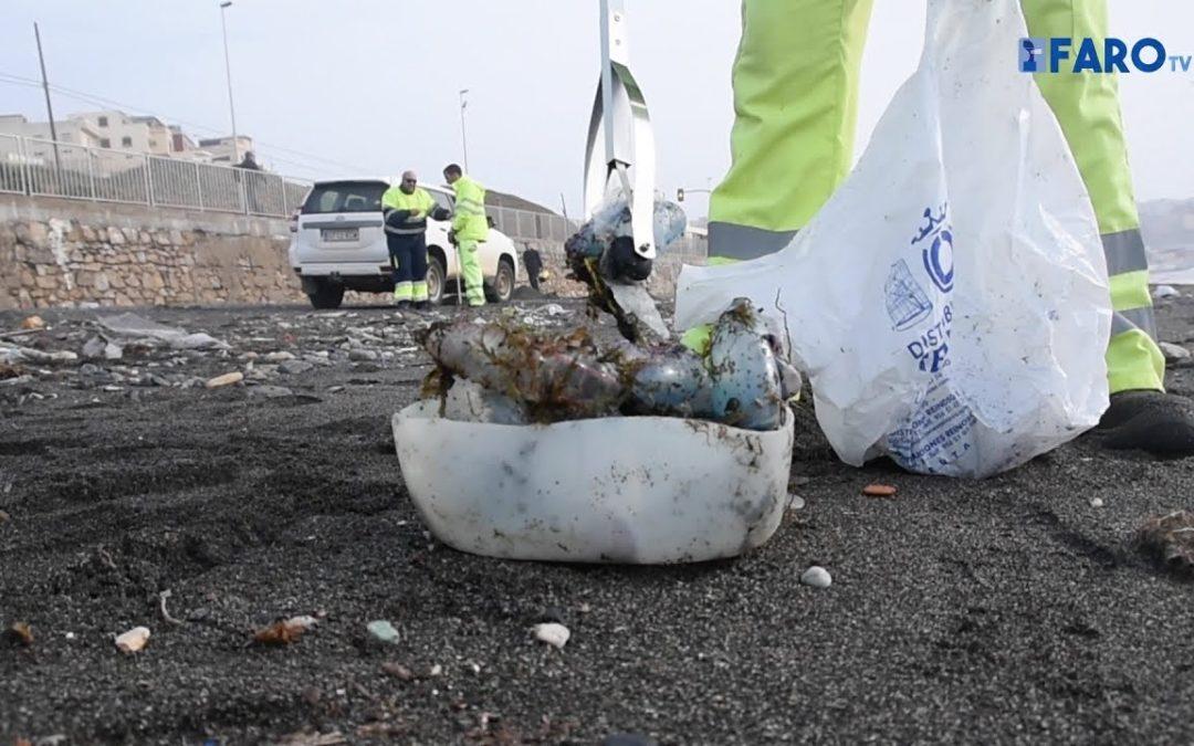 La playa del Tarajal: carabelas portuguesas, plásticos y algas